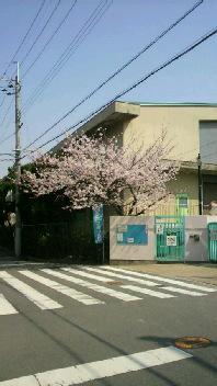 こっちの桜も。