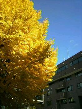 秋の1日。